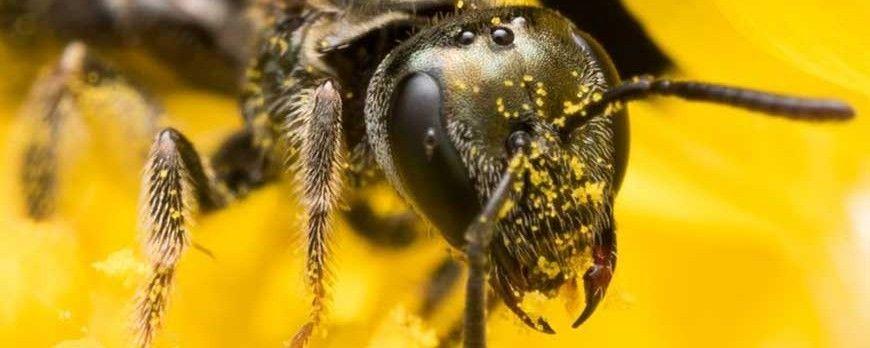 خانمی که فکر میکرد چشمانش عفونت کرده اما زنبور ها در چشم او زندگی می کردند !!